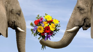 elephant-giving-flowers